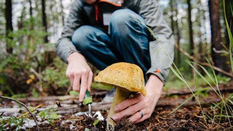 Mushroom-Society-SLMag-Austen-Diamond-Photography-2
