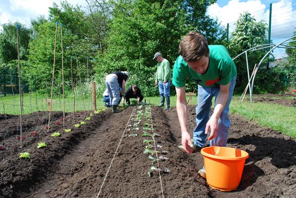 grow-waterworks-garden_planting-out-seedlings