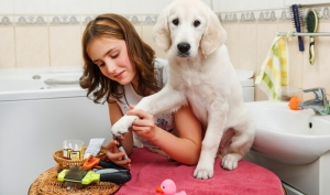 how-to-find-the-right-dog-groomer-1