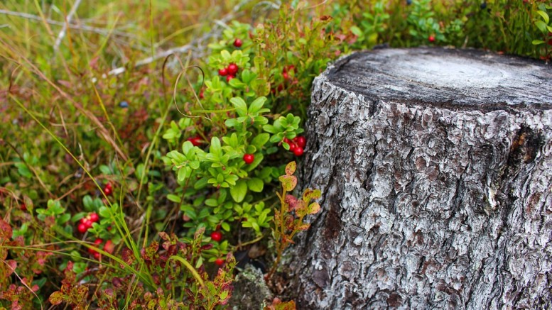 stump-1648566_960_720